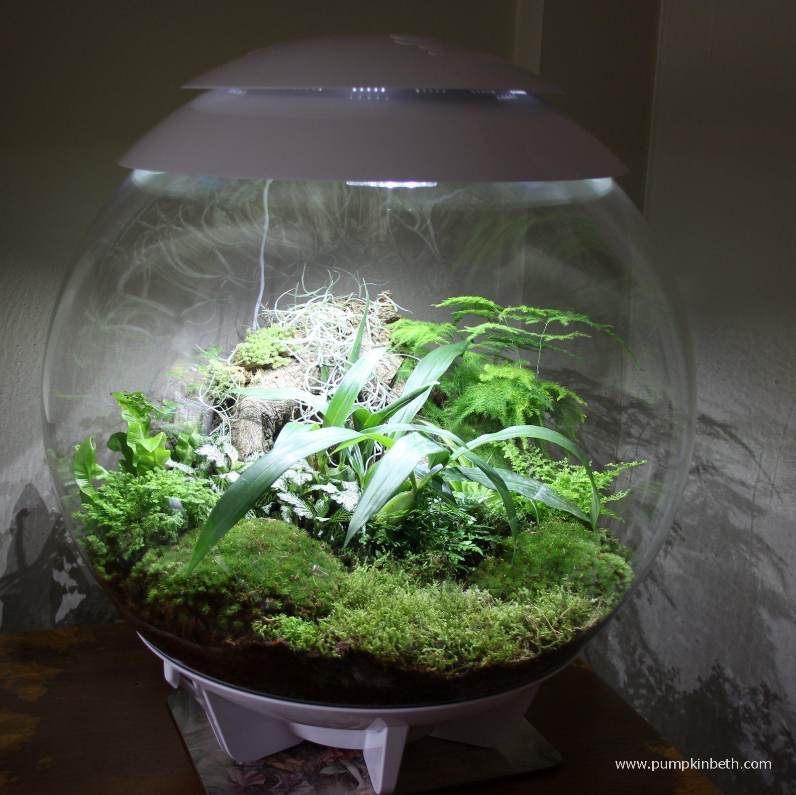 Indoor Gardening - Magazine cover