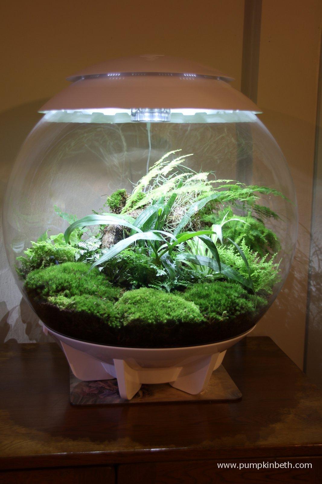planting list for biorbair and traditional terrariums. Black Bedroom Furniture Sets. Home Design Ideas