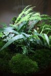 Planting list for my BiOrbAir and traditional terrarium