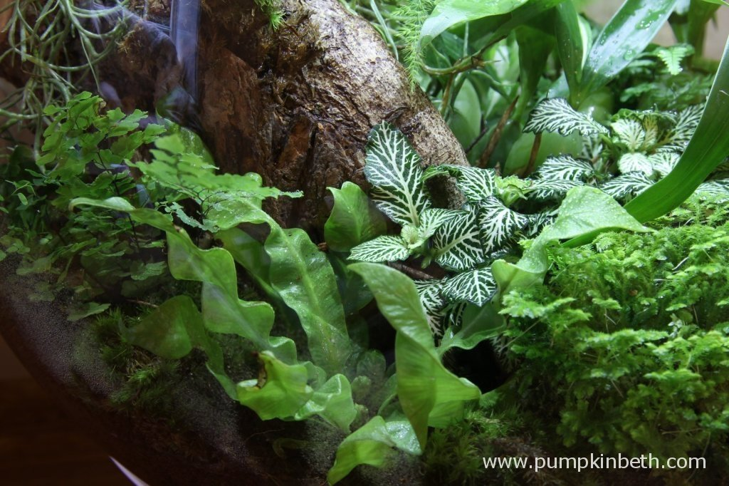 A view of Selaginella kraussiana and nearby plants, picture taken on 9th November 2014