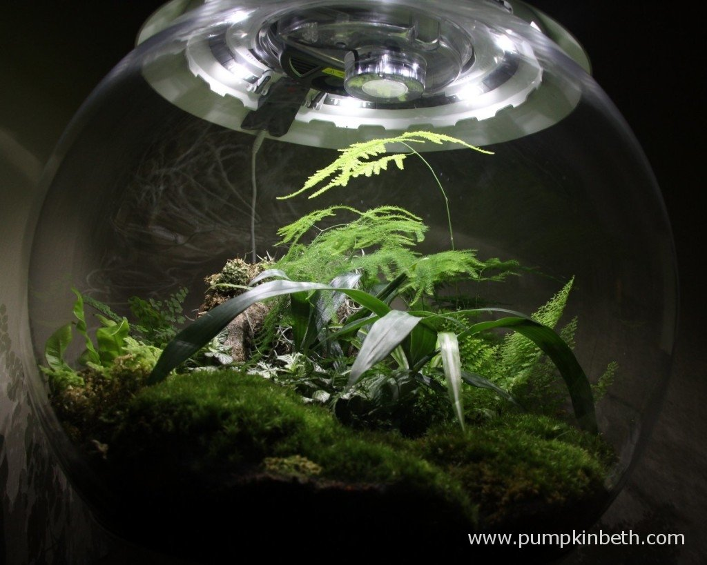 My BiOrbAir on 11th January 2015 - you can see some of the moss at the front of the terrarium has discoloured and is becoming more brown with time