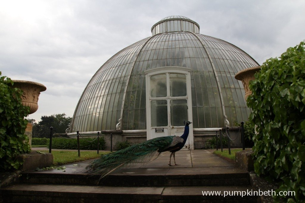 Kew Gardens is a wonderful garden to visit at any time of year