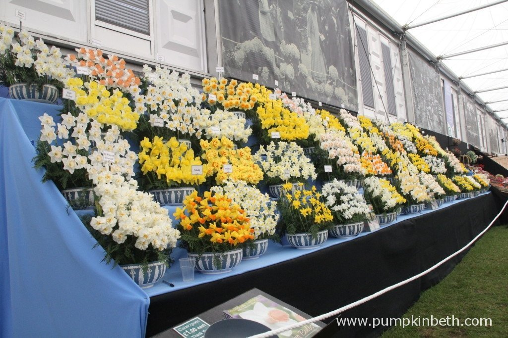 Here's Walkers Bulbs Gold Medal winning, and absolutely stunning, daffodil exhibit.
