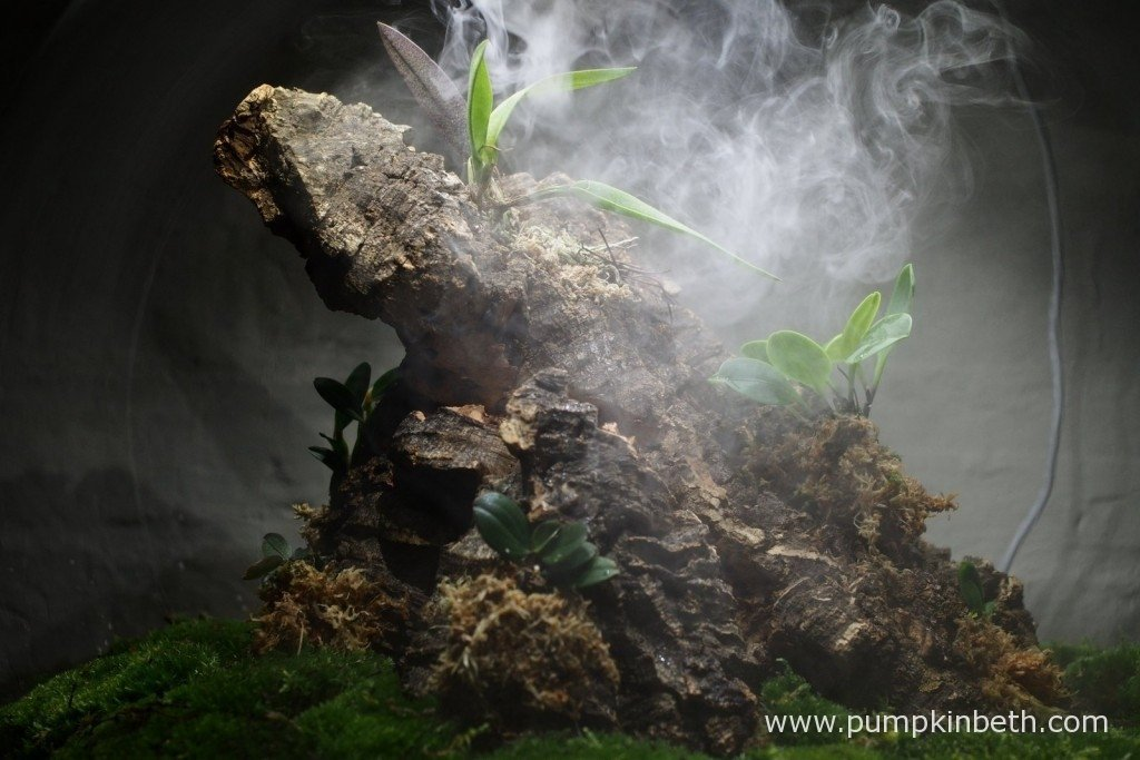 My miniature orchids being misted by the BiOrbAir's ultra sonic misting unit. 26th August 2015.