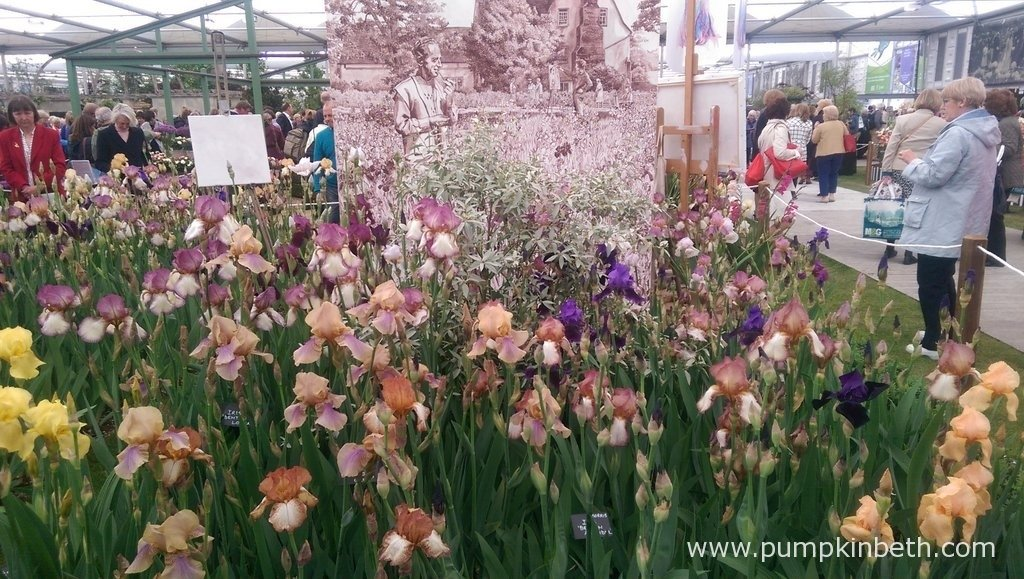 This beautiful exhibit from Howard Nurseries & National Collection Sir Cedric Morris Irises showcases the bearded Irises bred by Sir Cedric Morris from 1935 to 1960.