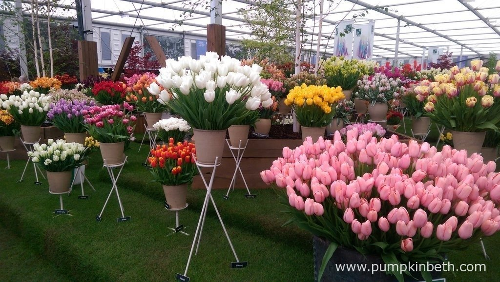 Bloms Bulbs Gold Medal winning display of beautiful Tulips at the RHS Chelsea Flower Show.