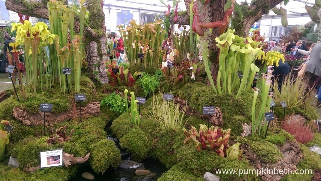The Gold Medal winning exhibit from Hewitt-Cooper Carnivorous Plants.