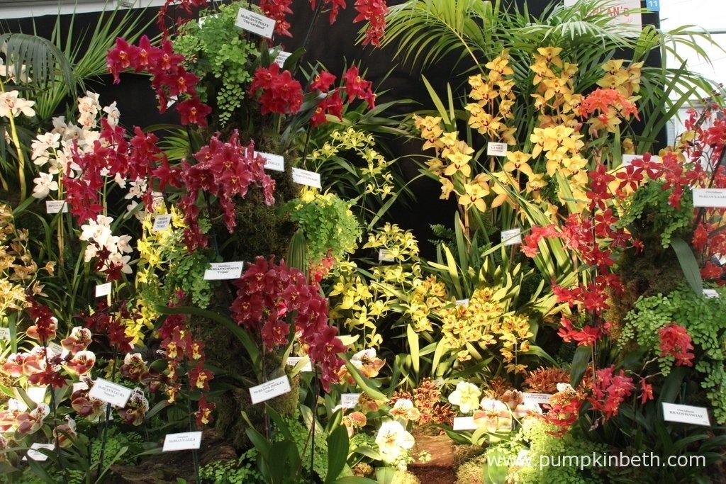 A beautiful exhibit from McBean's Orchids in the Floral Marquee.