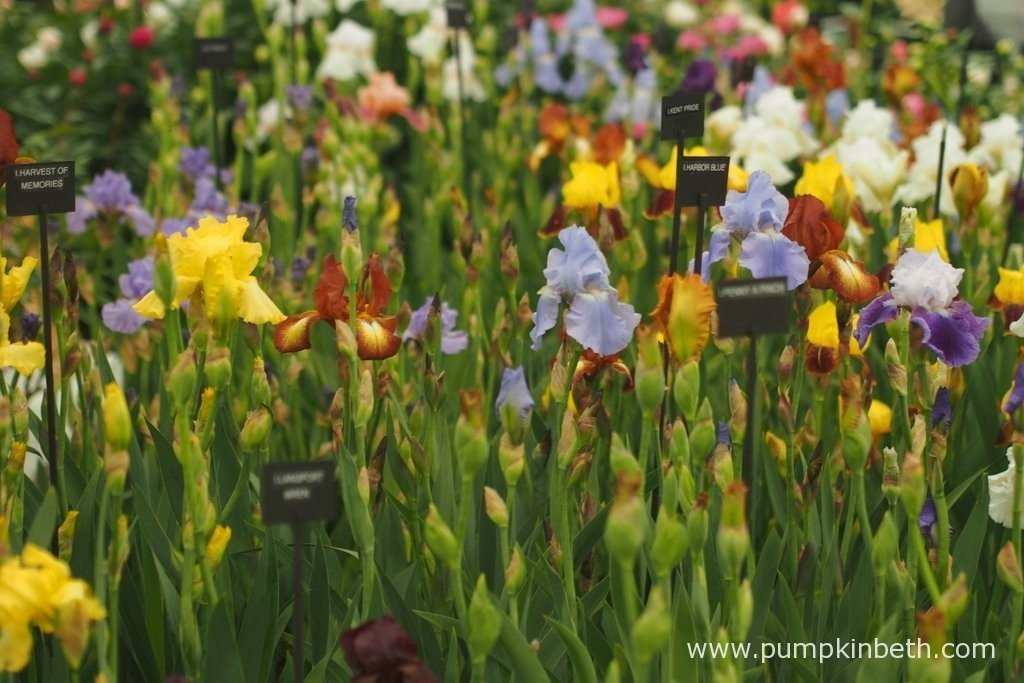 Irises were a particular feature of the RHS Chelsea Flower Show 2015, with many beautiful Iris plants featured in the Show Gardens and on display in the Floral Marquee.