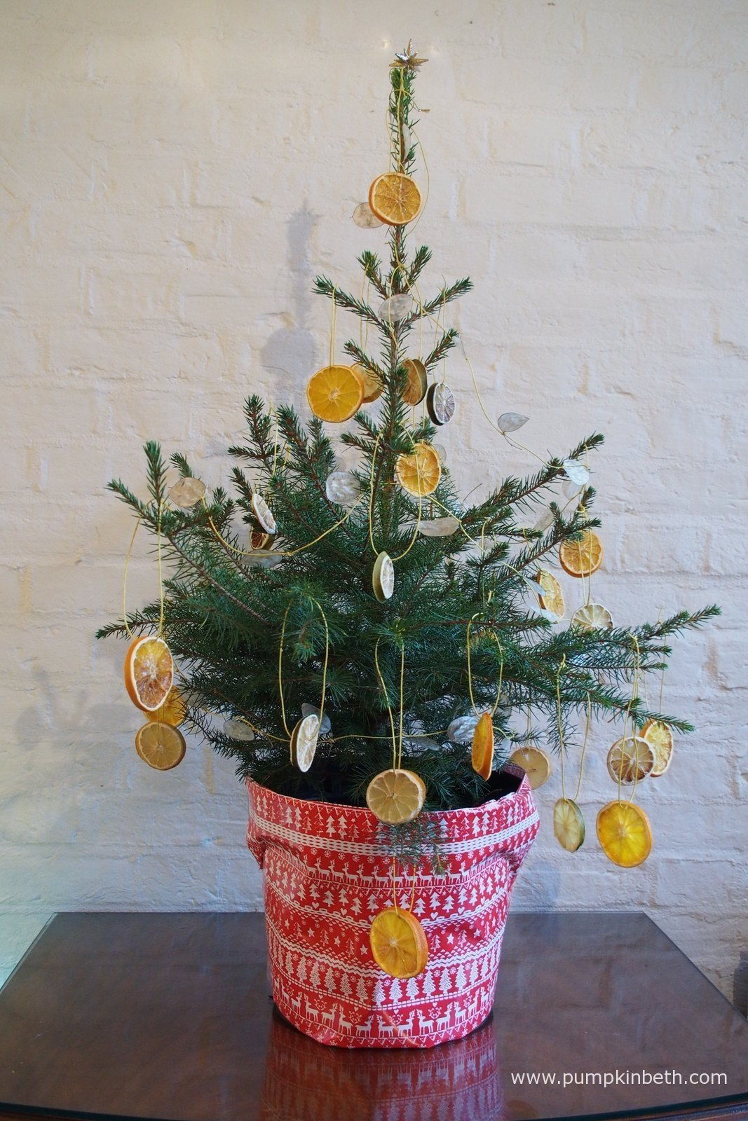 Live Growing Potted Christmas Trees From Wheeler Street