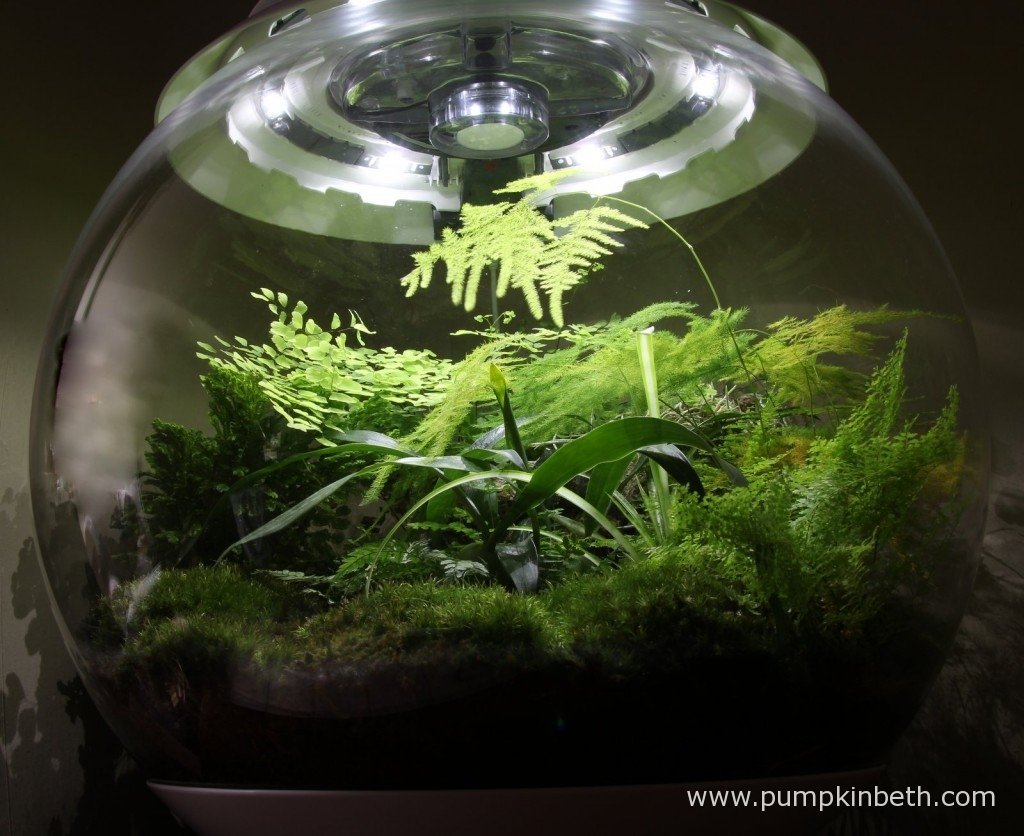 The BiOrbAir has six evenly positioned LED lights, producing a light at 5,600 Kelvin - the same colour temperature as daylight. The light from the BiOrbAir gives an uplifting warm glow to the room in which the terrarium resides, creating a very special feature and enhancing the interior of your home.