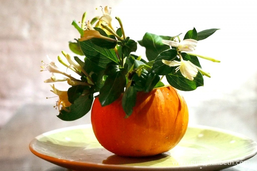Here's a small vase I made from a small pumpkin, this activity, using Dahlias, instead of Honeysuckle, and different squashes, features in 'The Crafted Garden' book by Louise Curley.