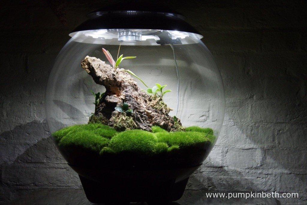 My Miniature Orchid Trial BiOrbAir terrarium on 6th November 2015.