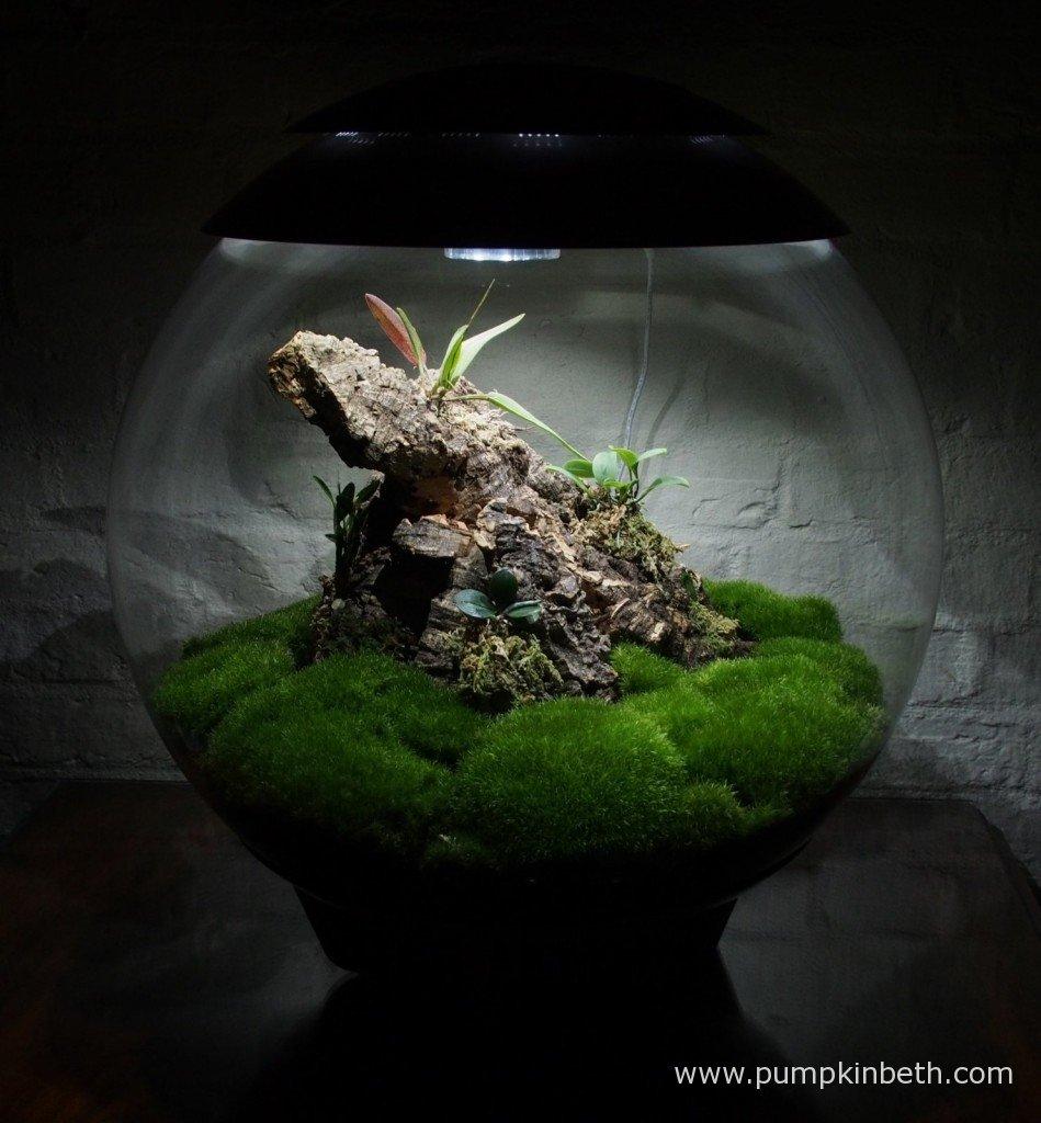 My Miniature Orchid Trial BiOrbAir Terrarium as pictured on 8th December 2015.