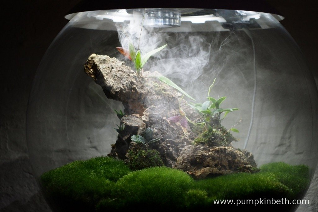 The ultra sonic misting unit in operation inside my Miniature Orchid Trial BiOrbAir Terrarium, as pictured on the 26th January 2016.