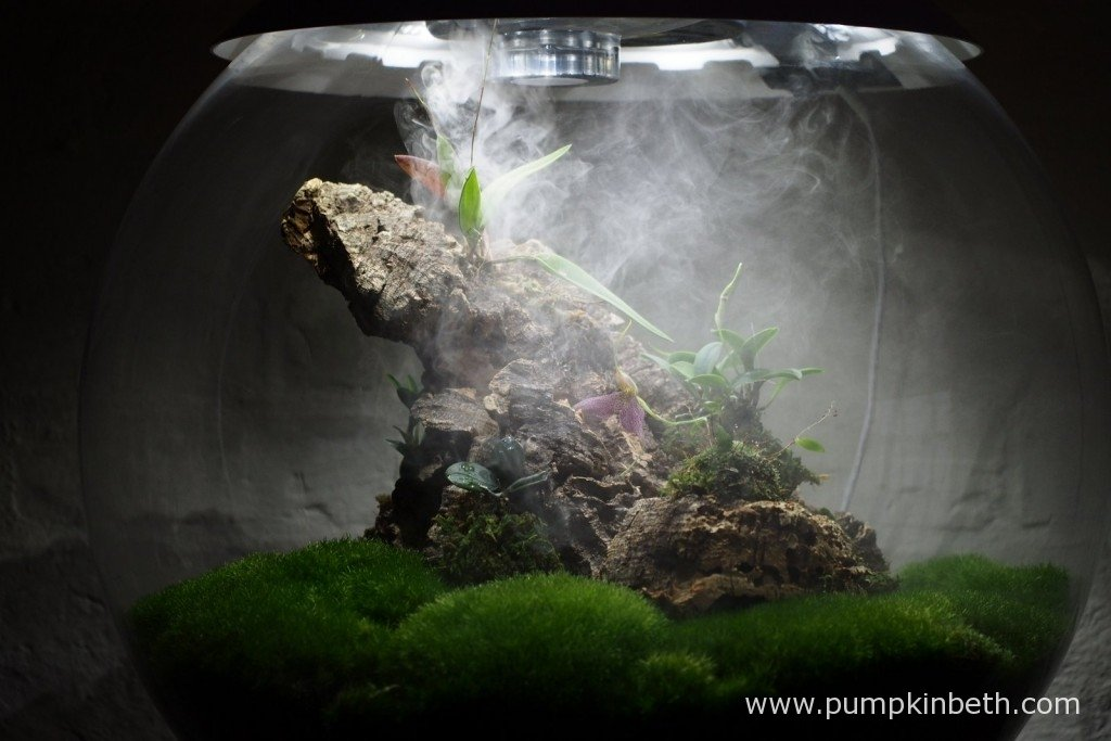 The ultra sonic misting unit in operation inside my Miniature Orchid Trial BiOrbAir Terrarium, as pictured on the 26th January 2016. The misting unit will operate automatically if the humidity level drops below 75 RH. There's a discrete lever inside the BiOrbAir, that when pressed for a second operates the misting unit, so you easily mist your plants as often as you'd like to.