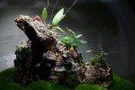 BiOrbAir Review – Growing Miniature Orchids in the BiOrbAir (part two)
