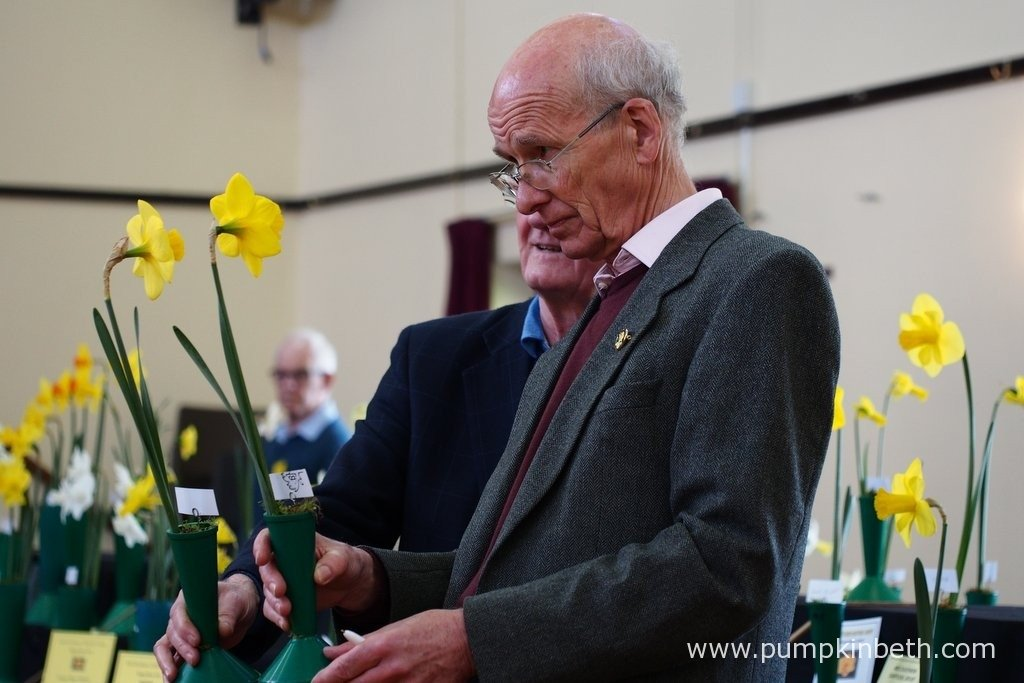 Richard Hilson, one of the Daffodil Judges, examining two of the entries to The Daffodil Society Mid Southern Group Spring Show at Cobham with Daffodil Judge Robin Couchman.