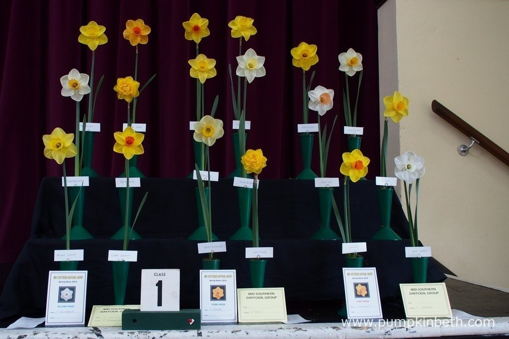 The Daffodil Collections were much admired by the visitors to The Daffodil Society Mid Southern Group Spring Show at Cobham.