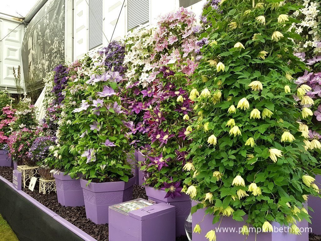 Award winning nurseries at the rhs chelsea flower show - Chelsea flower show gold medals ...