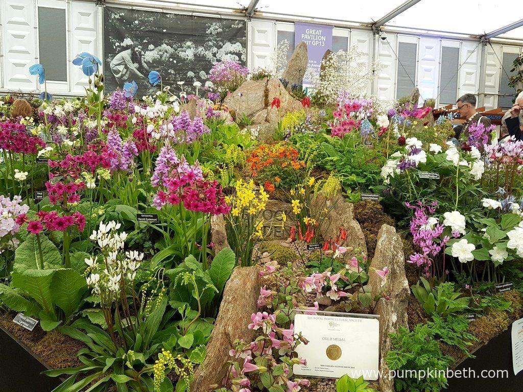 Award Winning Nurseries At The Rhs Chelsea Flower Show