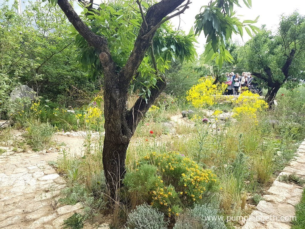The L'Occitane Garden was designed by James Basson and built by Peter Dowle for The RHS Chelsea Flower Show 2016. The RHS judges awarded this Show Garden with a Gold Medal.
