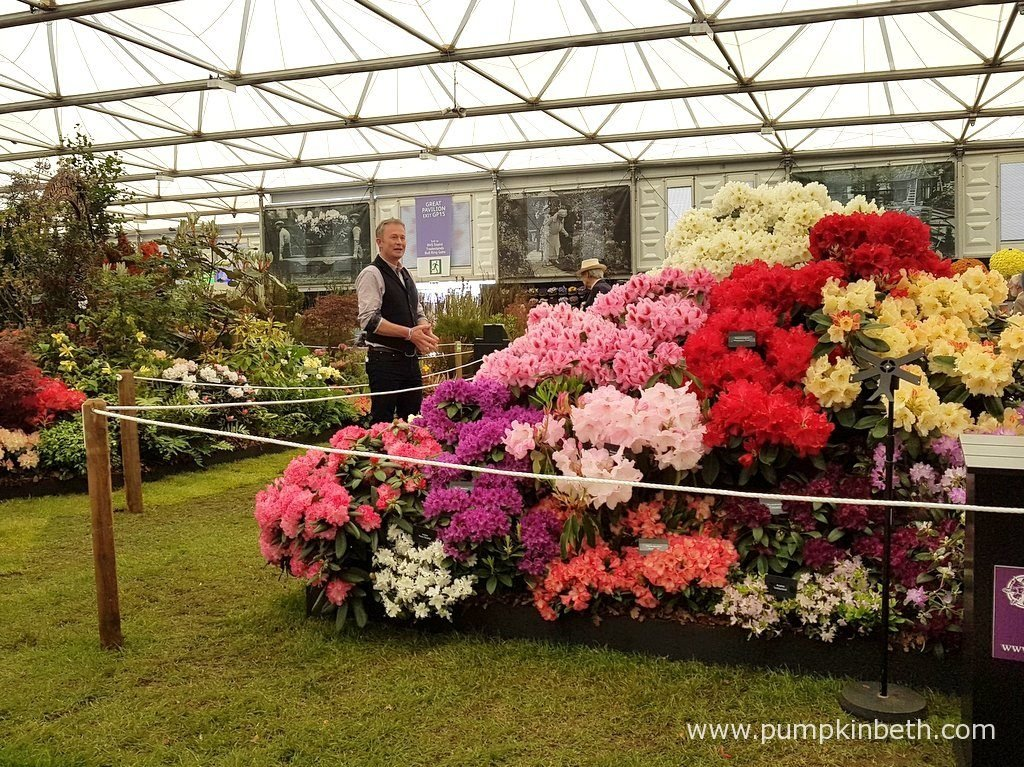 Toby Buckland broadcasting from Millais Nurseries' Gold Medal winning Rhododendron exhibit, inside the Great Pavilion, at the RHS Chelsea Flower Show 2016.