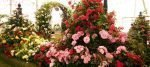 The Rose of the Year at the RHS Hampton Court Palace Flower Show 2016