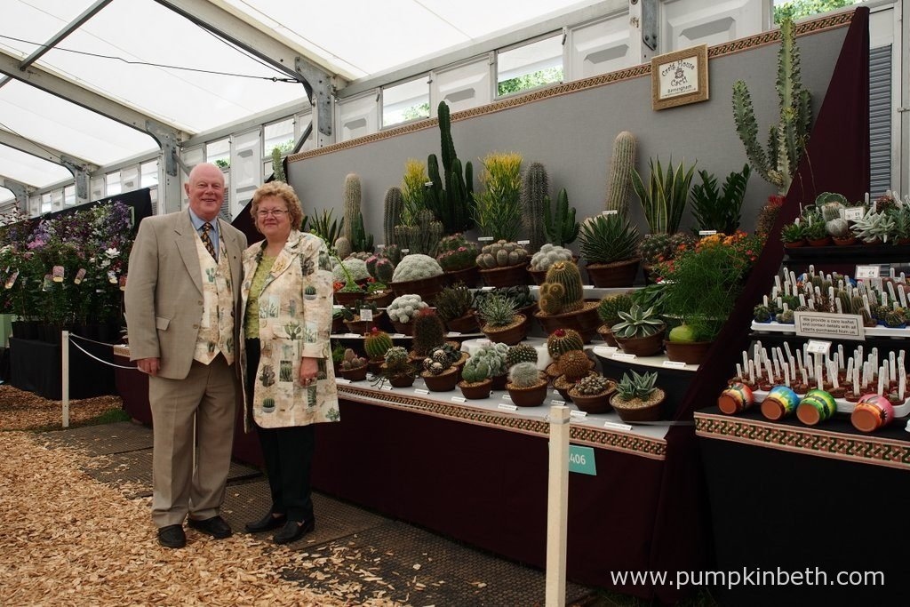 Stan Griffin and Vicki Newman from Craig House Cacti, with their amazing cacti exhibit, inside the Floral Marquee, at the RHS Hampton Court Palace Flower Show 2016.