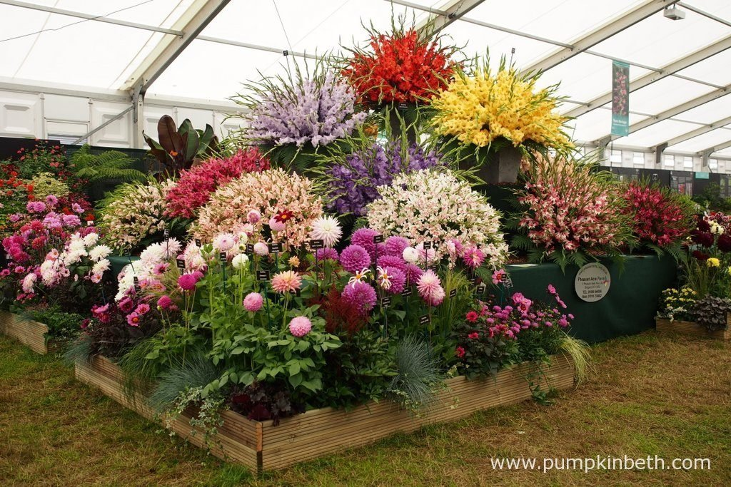 Pheasant Acre Plants were awarded a Gold Medal by the RHS judges for their breath taking exhibit of Gladoili and Dahlias. Pictured inside the Floral Marquee, at the RHS Hampton Court Palace Flower Show 2016.