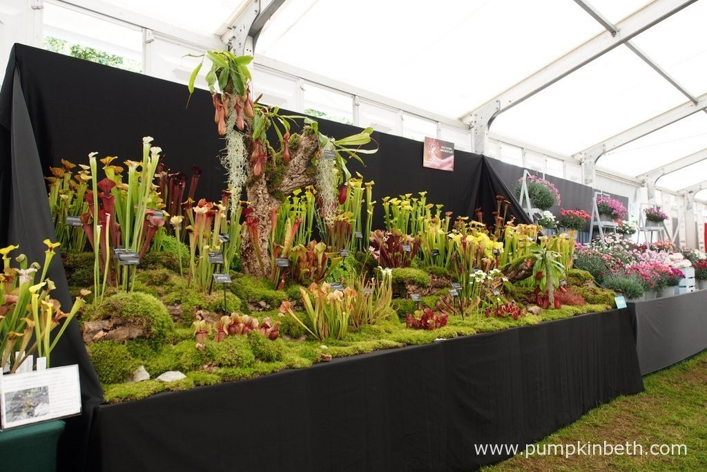 Hewitt-Cooper Carnivorous Plants were awarded a Gold Medal, by the RHS judges for their wonderful display of carnivorous plants, at the RHS Hampton Court Palace Flower Show 2016.