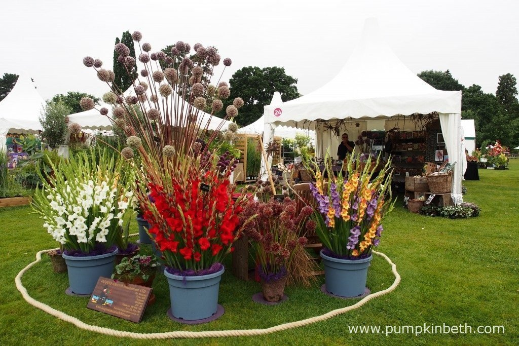 Jacques Amand International have a super stand at the RHS Wisley Flower Show, where they are selling a huge variety of top quality bulbs. Now is the ideal time to plant many spring flowering bulbs, for beautiful flowers, colour, and fragrance next spring.