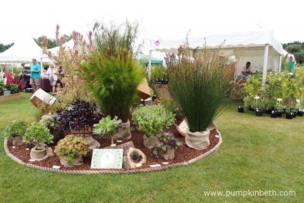 Penberth Plants are from Cornwall, it's wonderful to be able to visit their plant stand at the RHS Wisley Flower Show. Penberth Plants grow Aeoniums, Restios, Cape Heaths and members of the Protea family at their West Cornwall nursery.