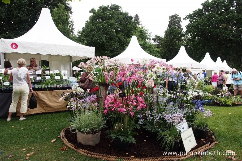 The Hoyland Plant Centre's stand at the RHS Wisley Flower Show features lots of beautiful Agapanthus.