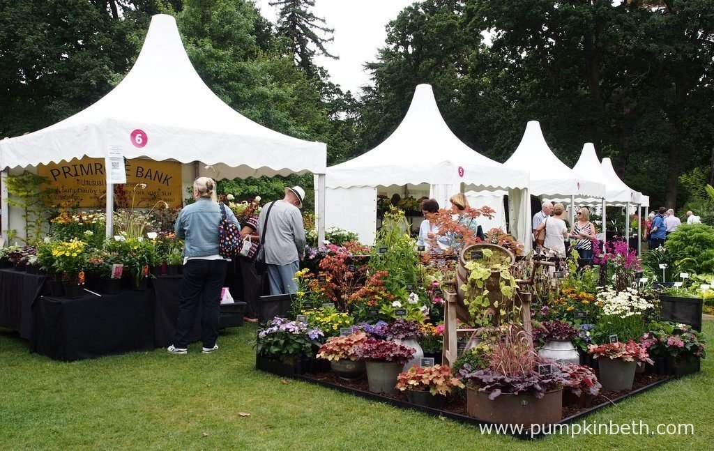 Primrose Bank are a nursery specialising in growing hardy perennials. Pictured at the RHS Wisley Flower Show 2016.