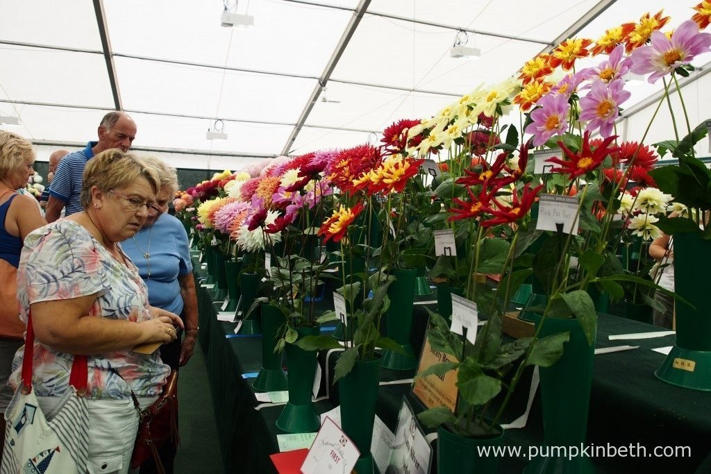 The National Dahlia Society's Annual Show is held in the National Dahlia Society Tent, at the RHS Wisley Flower Show. Don't forget to enter the People's Dahlia Competition on the Saturday and Sunday of the Show!