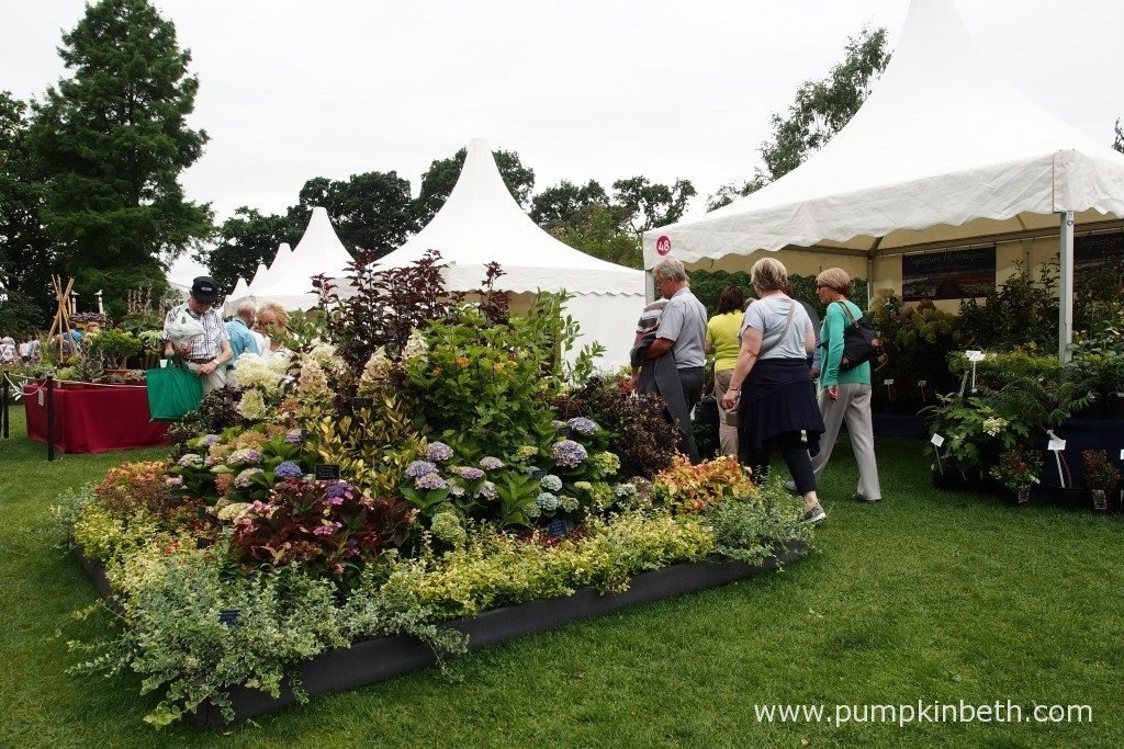 This is the Signature Hydrangeas stand from Golden Hill Nurseries, at the RHS Wisley Flower Show 2016.