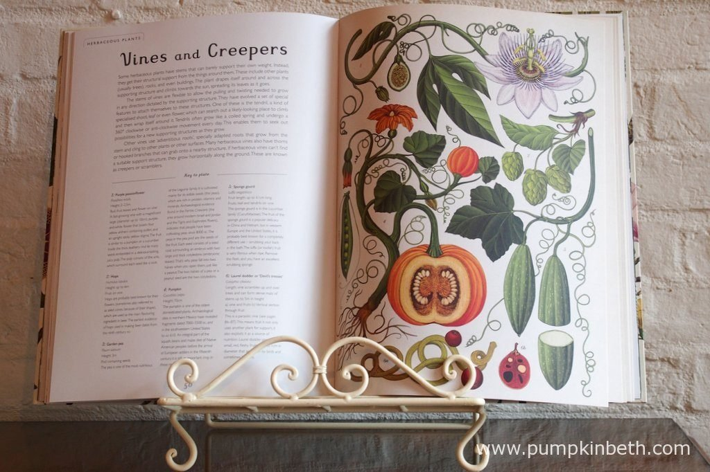 Botanicum is a large sized book. Each and every page of Botanicum is a joy that will touch and warm your heart as you turn each page. I have been utterly enchanted and captivated by Katie Scott's truly beautiful illustrations.