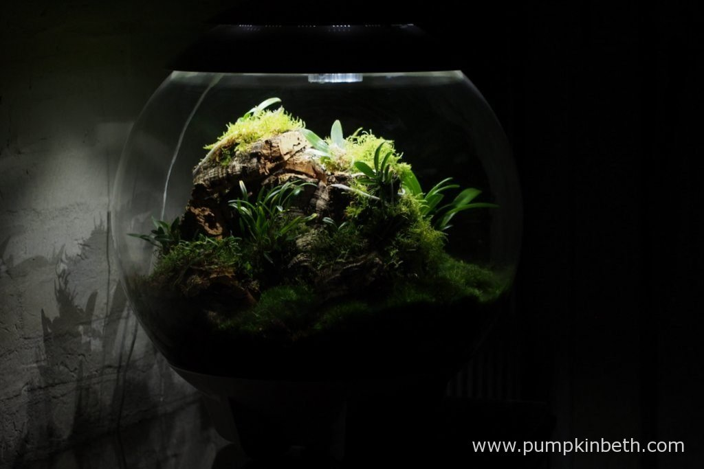 Although I have updated the plants and planting during the time that I have had this terrarium, I have not changed the moss. The moss that you see here, at the base of the terrarium, is the very same moss I used when I planted the terrarium over a year ago. Pictured on the 16th October 2016.