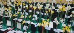 2017 Daffodil Shows and Competitions