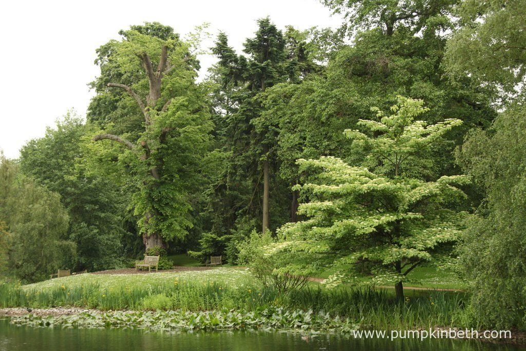 There are lots of places to relax, unwind, and enjoy the moment, at the Royal Botanic Gardens, Kew.