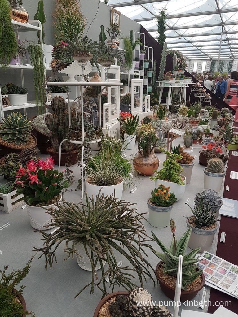 Craig House Cacti At The Rhs Chelsea Flower Show 2017
