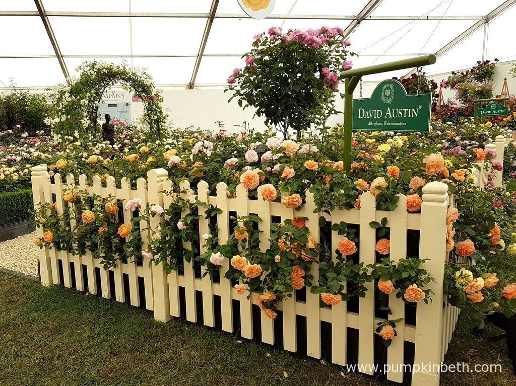 Rose of the year at the rhs hampton court palace flower - Hampton court flower show ...