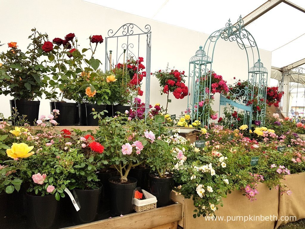 Rose of the year at the rhs hampton court palace flower show 2017 pumpkin beth - Hampton court flower show ...