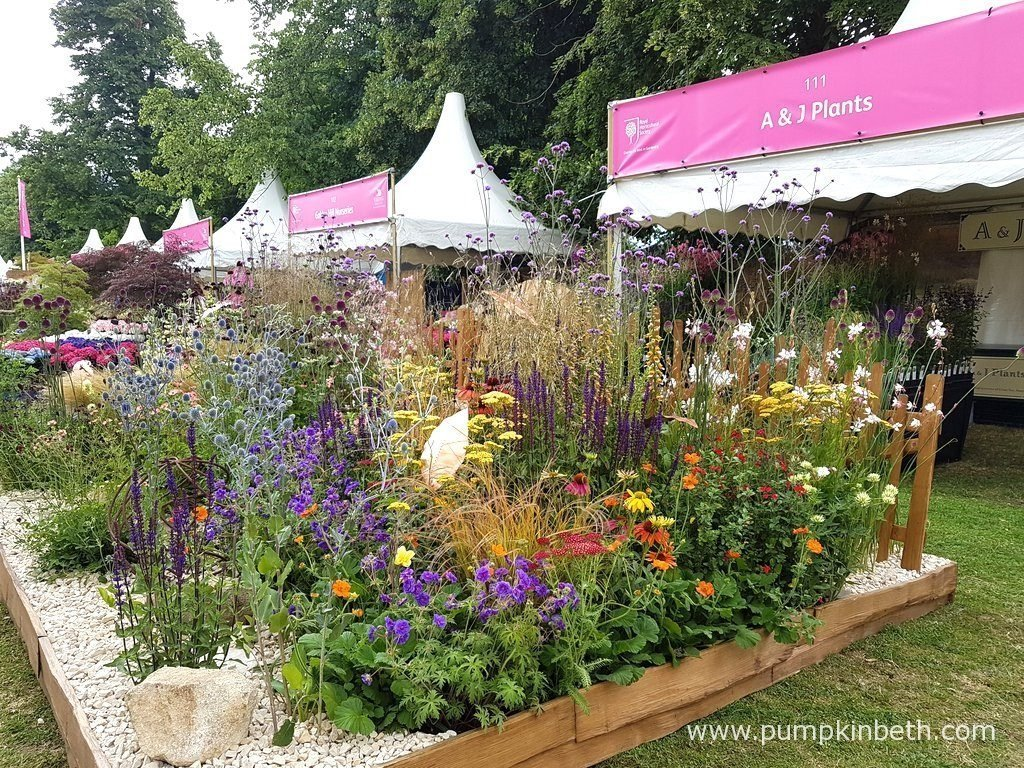 Specialist nurseries at the rhs hampton court palace flower show 2017 pumpkin beth - Hampton court flower show ...