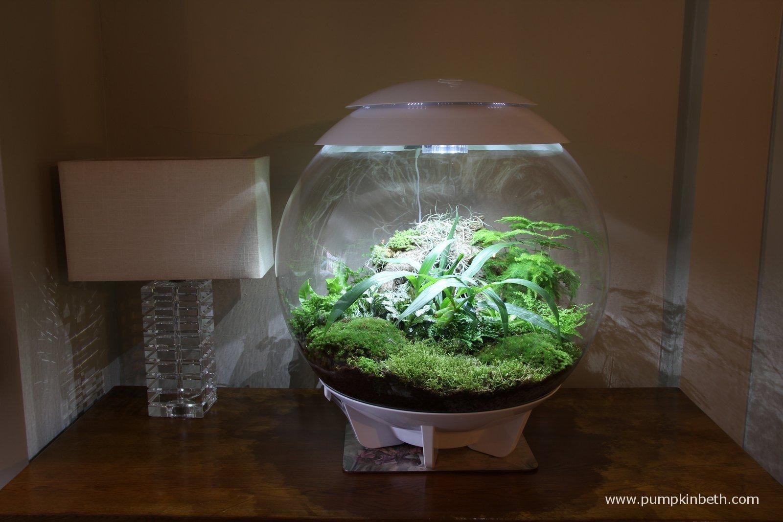 Biorbair review for Indoor gardening expo 2014