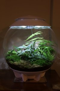The BiOrbAir and traditional terrariums
