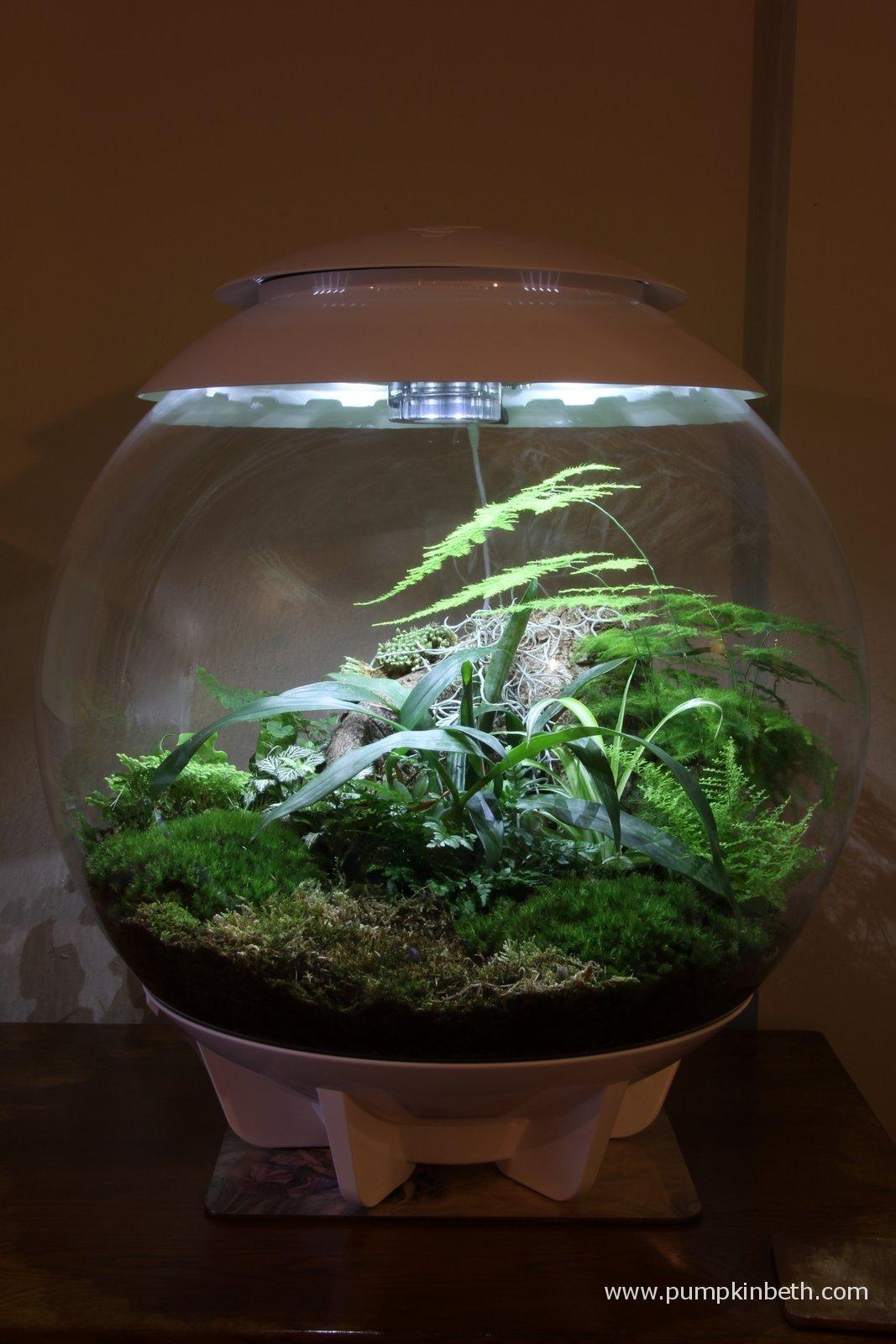 Biorbair terrarium review for Indoor gardening expo 2014