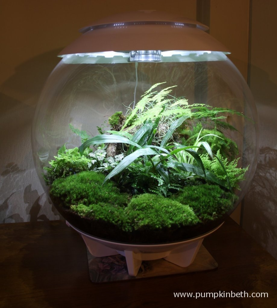 The BiOrbAir on 9th November 2014. The terrarium is planted with a variety of plants, ferns and mosses.