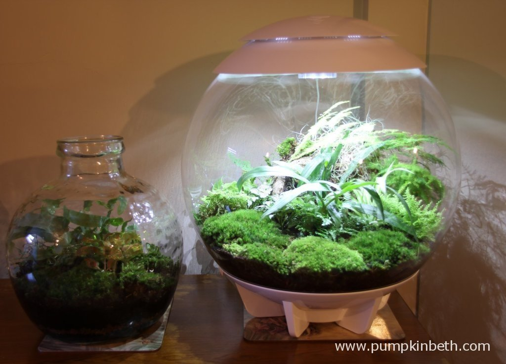 The BiOrbAir, a modern, specialised terrarium and a traditional glass terrarium or bottle garden.
